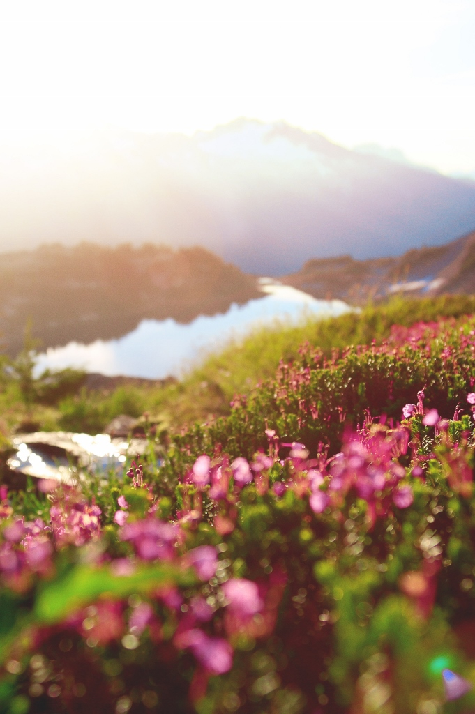 Flowers on a mountain with the sun shining