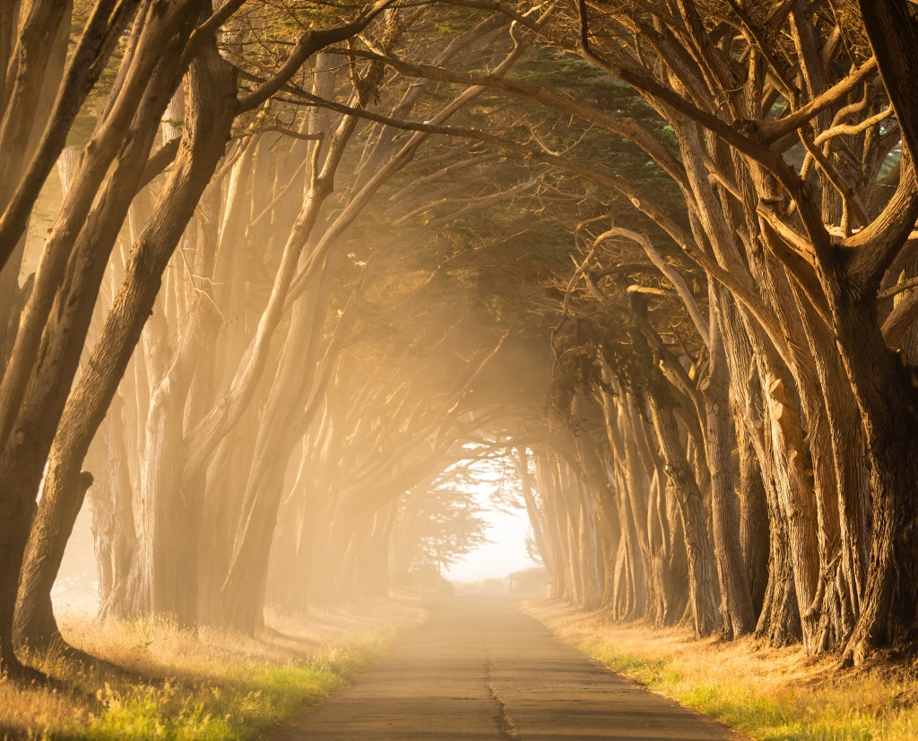 Sun shining through trees on a road